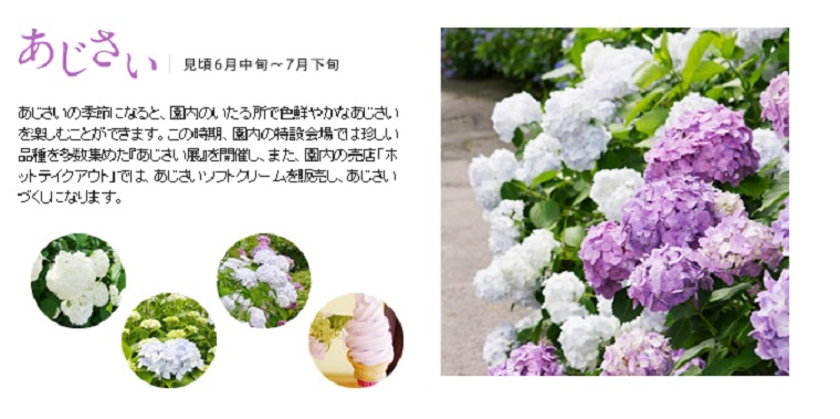 http://www.hakone-tozan.co.jp/