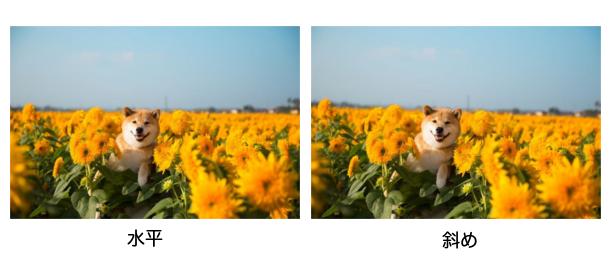 柴犬まる画像比較