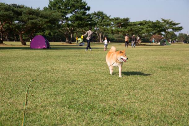 走りたい!