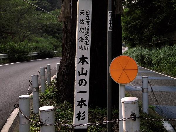 本山の一本杉
