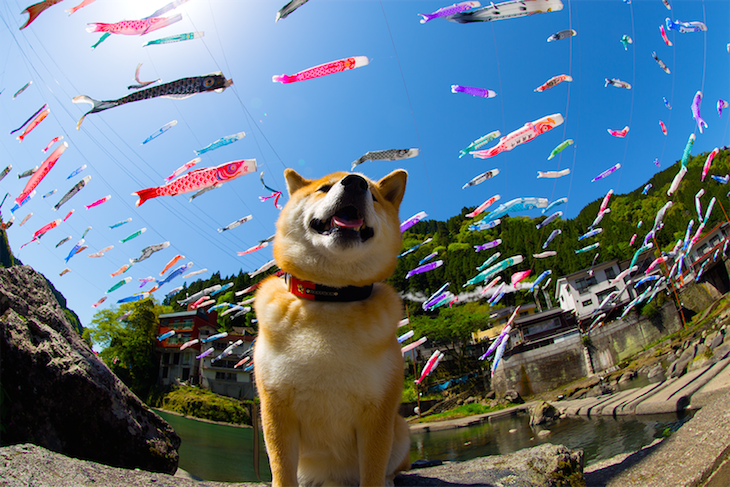 【インスタ150万フォロワー】柴犬まるが語る、GWに絶対行くべき日本の絶景