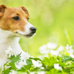 【最寄りICまでの地図付】ゴールデンウィークは愛犬と旅に出よう!ペットと泊まれる山梨県の宿30選