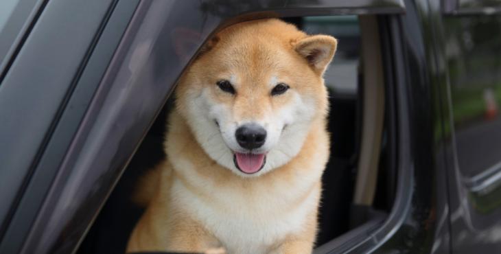 【インスタ160万フォロワー、柴犬まるに聞く】あなたの愛犬を「車酔い」から守るため12箇条
