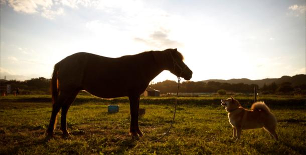 【柴犬まる】がご案内!山あり、川あり、馬あり?の絶景スポット「巾着田」の3つの魅力