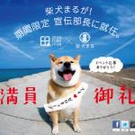 宣伝部長就任!?柴犬まるがクルマで行く初の九州出張レポート
