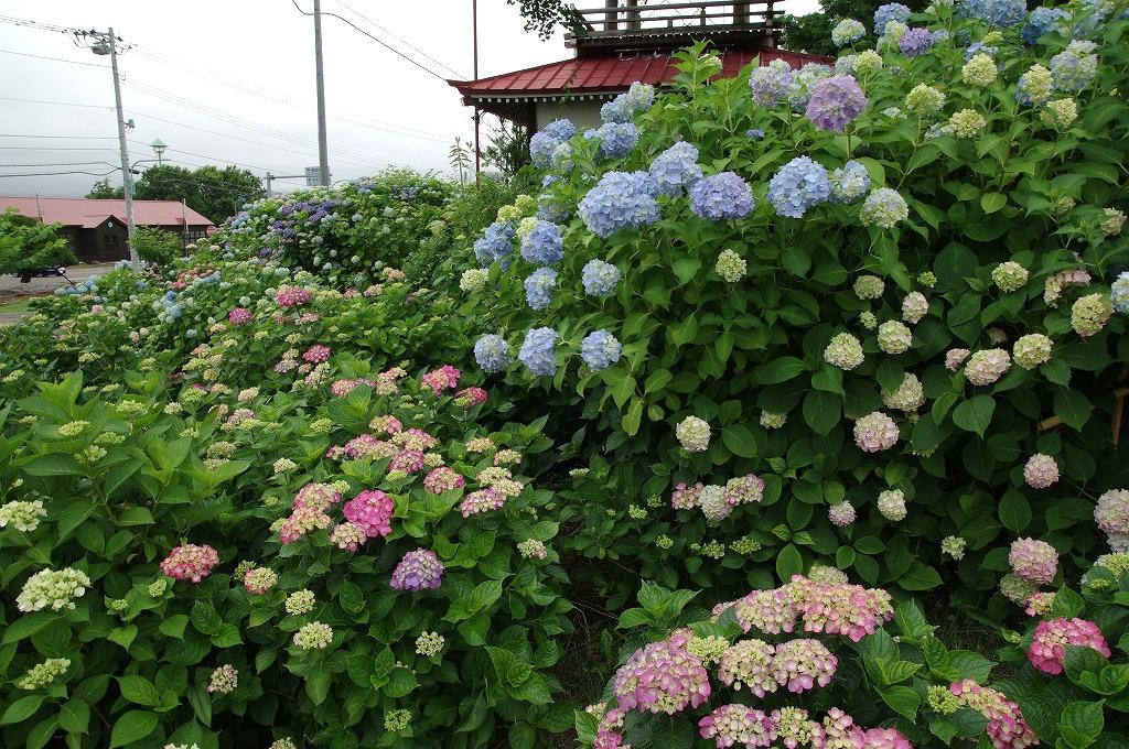 http://morupure.blog28.fc2.com/blog-entry-522.html