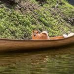 【作って・乗って・泳いで】埼玉の名栗湖は愛犬と一緒に水遊びをするのに最適!
