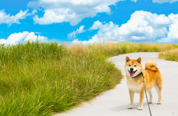 【海&山が魅力の伊豆高原】実は、犬にとっても楽園だった~柴犬まるの実体験リポート付~