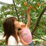北海道で果物狩りができるスポット3選
