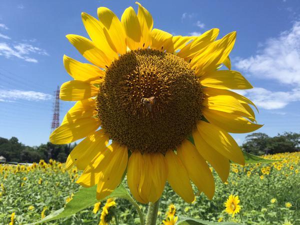愛知県の絶景スポット!おすすめ牧場3選