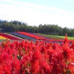 北海道の広大な大自然を楽しめるおすすめスポット3選