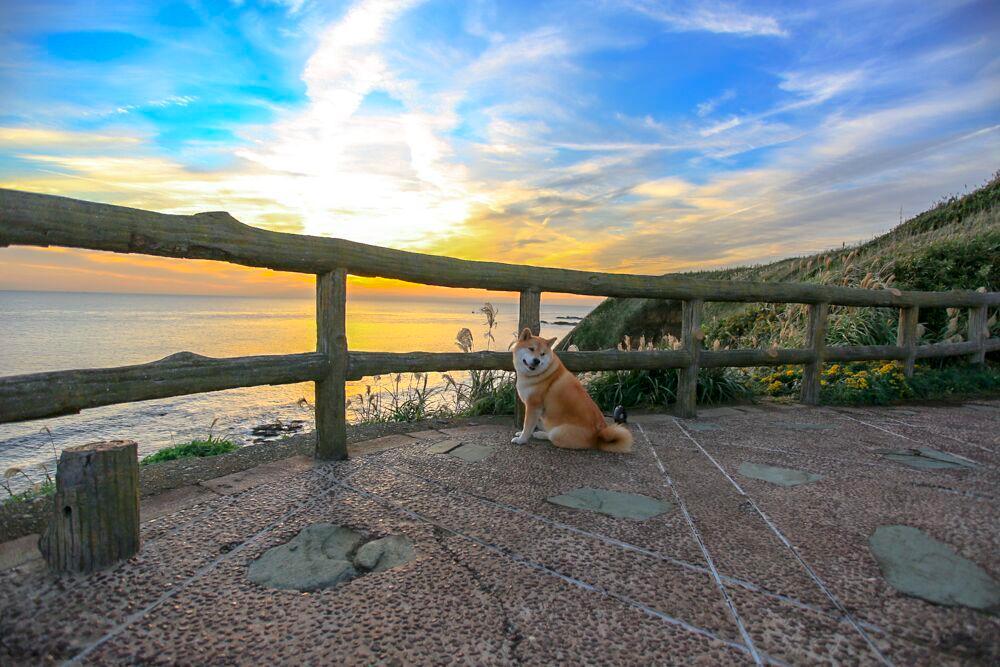 【絶景情報あり】ドッグラン付きの水族館!?柴犬まるが油壺マリンパークをご紹介!