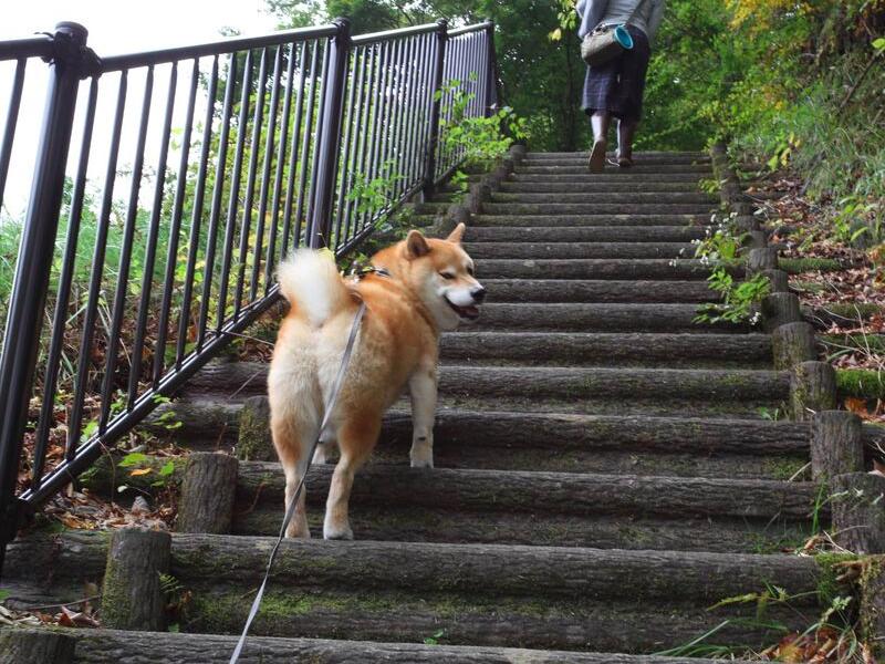 道を登るよ