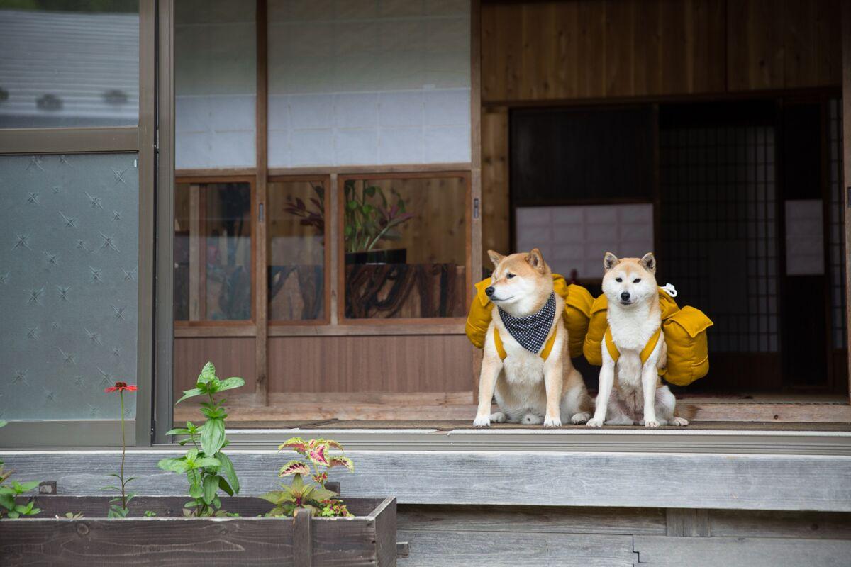柴犬まるの2015年を振り返ってみよう【後編】