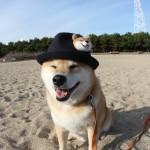 柴犬まるが紹介する関西の旅~神戸編