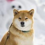 柴犬まるが紹介する福島の旅~その2