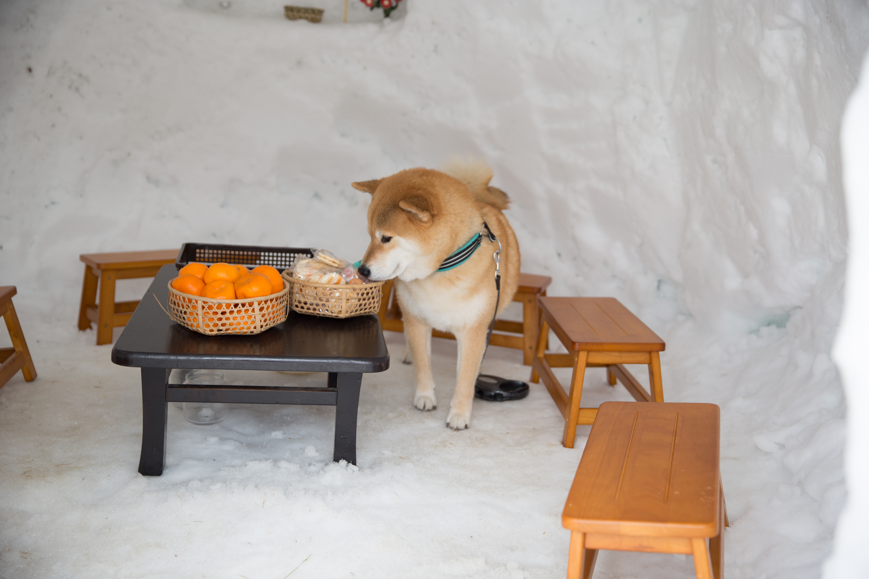 柴犬まるが紹介する福島の旅~その1