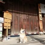 柴犬まるが紹介する岐阜の旅(前編)~まる、飛騨高山に行く~