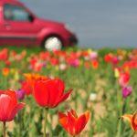ネモフィラ、ポピー、バラ…春に行きたい関東のフラワースポット8選