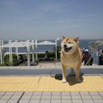 柴犬まるの南房総ドライブ(前編)~保田小学校・鋸山へ行くの巻~