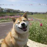 柴犬まるが紹介する東北の旅~まる、福島・宮城を満喫する~