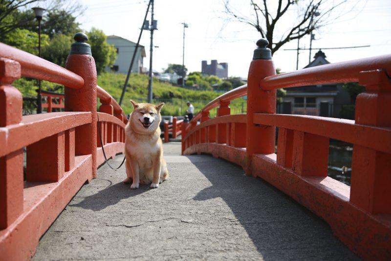 柴犬まるが紹介する静岡の旅~まる、パワースポットで元気百倍!~