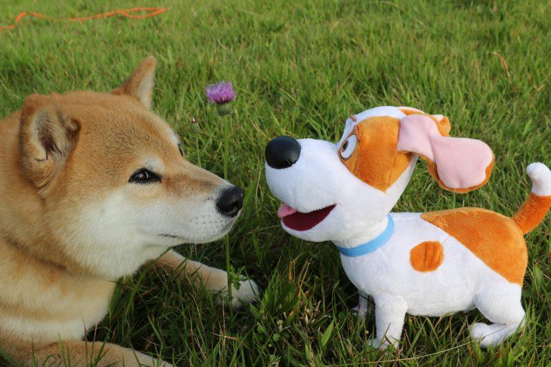 柴犬まるはどこにいるでしょう?仲良しわんこと一緒に東京観光(前編)