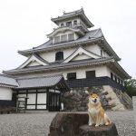 柴犬まるが紹介する滋賀の旅(前編)~まる、初めて琵琶湖に行く~