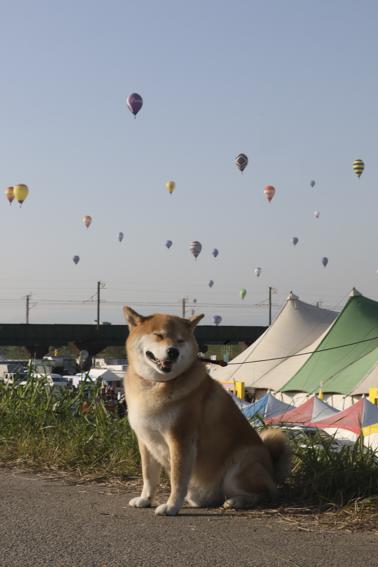 バルーンに感動、旧友に再会…柴犬まるが紹介する九州ぶらり旅(後編)