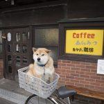 おすすめスポット一挙紹介! 柴犬まる、聖地巡礼の旅に出る(後編)