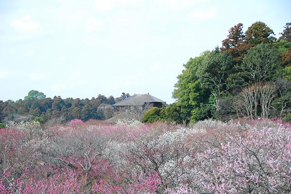 茨城県は魅力がいっぱい!茨城県オススメドライブスポット10選
