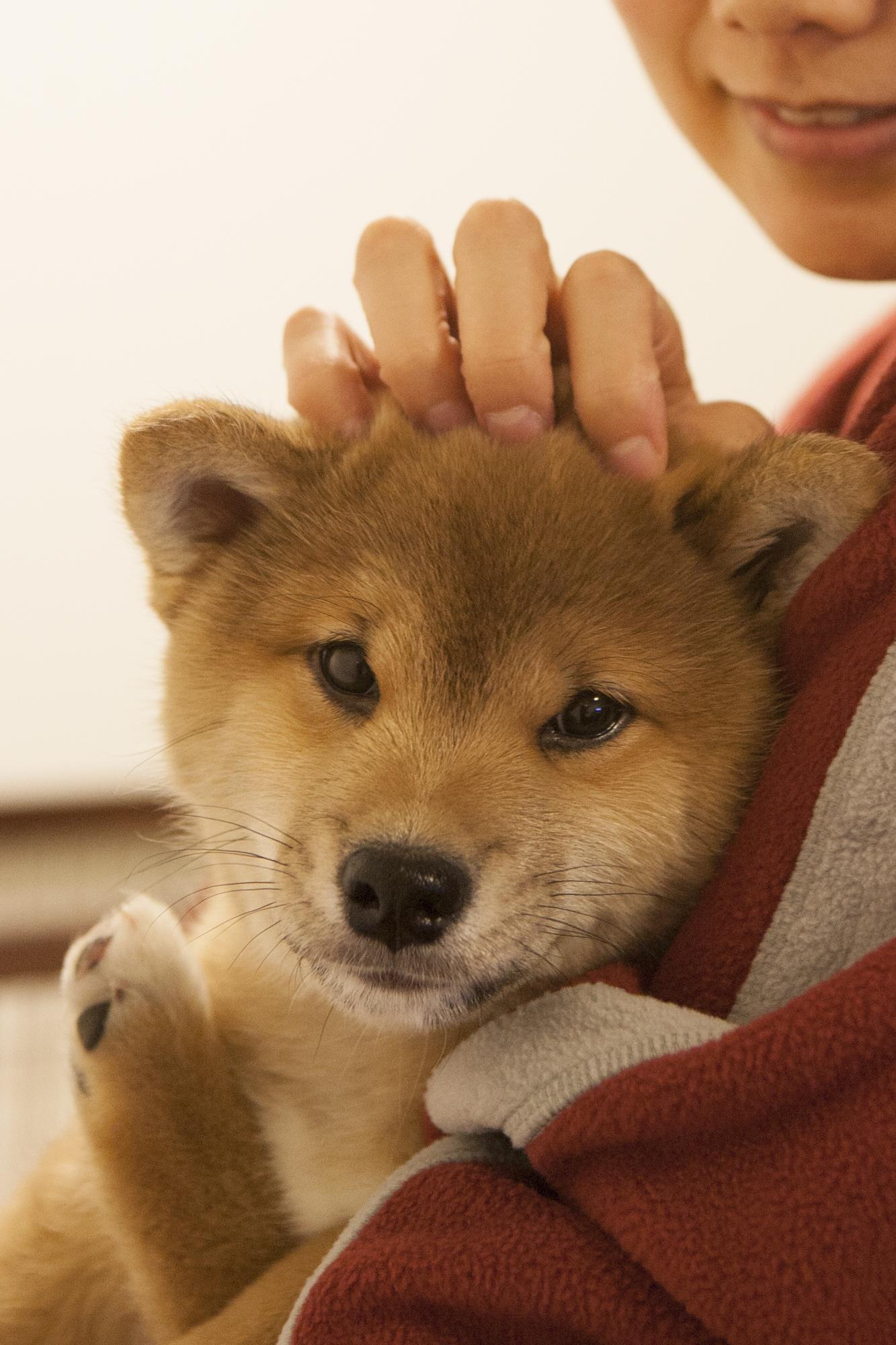 """もうすぐ母の日! """"柴犬まる流""""母の日のプレゼント!"""