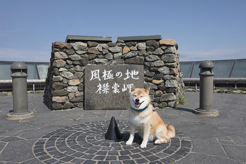 柴犬まるのフェリーで行く北海道10日間の旅【前編】