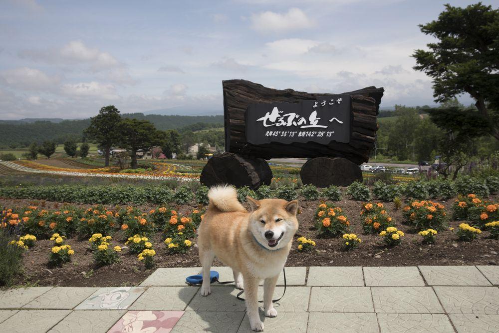 柴犬まるのフェリーで行く北海道10日間の旅【後編】