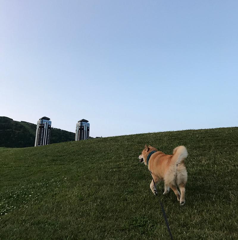 柴犬まるのフェリーで行く北海道10日間の旅~あこがれの星野リゾート編~【中編】