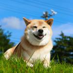 季節の変わり目は体調管理に注意!柴犬まるが教える秋バテ解消講座