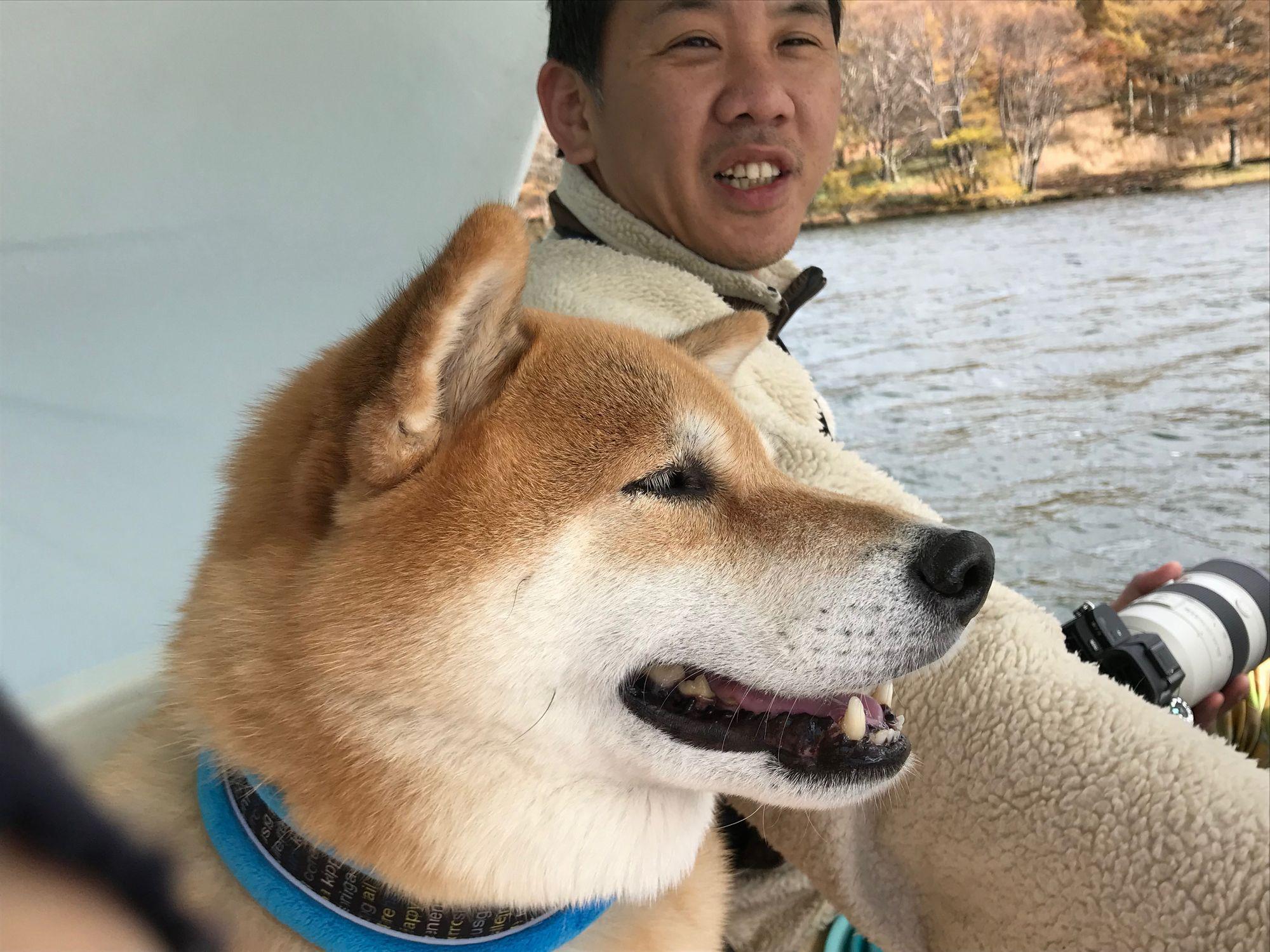 秋の蓼科(たてしな)をぶらりお散歩!柴犬まるの紅葉満喫プラン【後編】