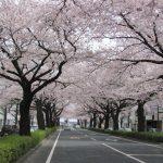 今年もいよいよ開花目前!ドライブがてらに行ける茨城のおすすめ桜名所をピックアップ